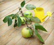 Tres manzanas con las hojas en una superficie de madera Fotografía de archivo libre de regalías