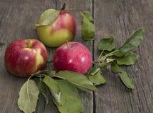Tres manzanas con las hojas en una tabla de madera Imagen de archivo