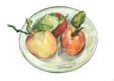 Tres manzanas de la acuarela Imagen de archivo