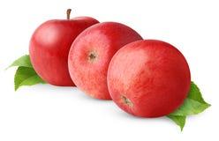 Tres manzanas rojas Imágenes de archivo libres de regalías