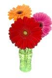 Tres margaritas coloridas del gerber en florero Fotografía de archivo