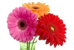 Tres margaritas coloridas del gerber en florero Foto de archivo libre de regalías