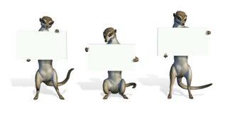 Tres Meerkats que lleva a cabo muestras en blanco Fotos de archivo libres de regalías