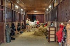 Tres muchachas están frotando ligeramente un caballo blanco en un establo foto de archivo libre de regalías