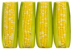 Tres oídos de maíz del supersweet Fotos de archivo