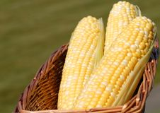 Tres oídos de maíz en la mazorca Fotos de archivo libres de regalías