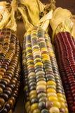 Tres oídos de maíz indio Foto de archivo libre de regalías