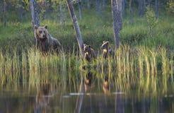 Tres osos por el lago Imágenes de archivo libres de regalías