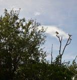 Tres pájaros en una rama en los árboles imagenes de archivo