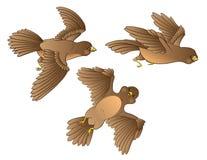 Tres pájaros jovenes que vuelan. stock de ilustración