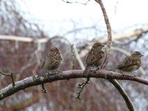 Tres pájaros que hacen frente lejos Fotos de archivo libres de regalías