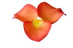 Tres pétalos color de rosa Imagenes de archivo