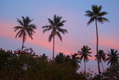 Tres palmas en la puesta del sol en una playa tropical Fotos de archivo