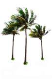 Tres palmas y árboles de coco Foto de archivo libre de regalías