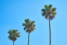 Tres palmeras imagen de archivo