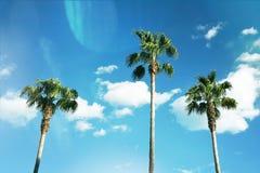 Tres palmeras agradables contra el cielo soleado azul Fotografía de archivo libre de regalías