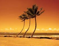 Tres palmeras contra un cielo anaranjado fotos de archivo libres de regalías