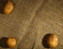 Tres patatas sin procesar Fotografía de archivo libre de regalías
