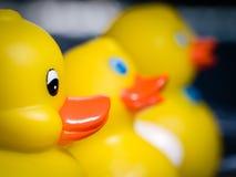 Tres patos de goma amarillos Foto de archivo libre de regalías