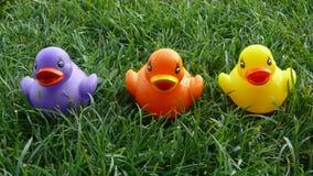 Tres patos plásticos coloridos en hierba Imágenes de archivo libres de regalías