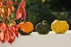 Tres pequeñas calabazas y hojas del rad en otoño Imagen de archivo libre de regalías