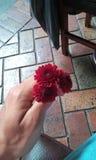Tres pequeñas flores Fotos de archivo libres de regalías