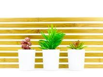 Tres pequeñas plantas suculentas del escritorio Imagen de archivo