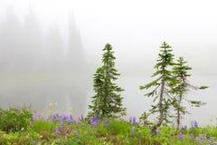 Tres pequeños árboles de pino cerca del lago con las flores y los abetos. Fotos de archivo libres de regalías