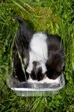 Tres pequeños gatitos drining la leche Fotos de archivo libres de regalías