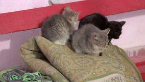 Tres pequeños gatitos en el viento almacen de metraje de vídeo