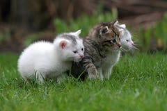 Tres pequeños gatitos en una fila imagen de archivo