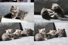 Tres pequeños gatitos, multicam, pantalla de la rejilla 2x2 Fotografía de archivo