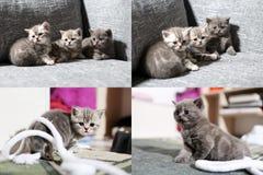 Tres pequeños gatitos, multicam, pantalla de la rejilla 2x2 Imagenes de archivo