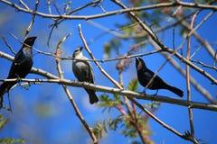 Tres pequeños pájaros Imagen de archivo libre de regalías