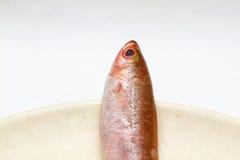 Tres pequeños pescados en plato Fotografía de archivo