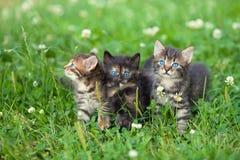 Tres pequeños gatitos lindos Imagen de archivo