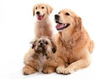 Tres perritos fotografía de archivo