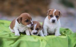 Tres perritos Imágenes de archivo libres de regalías
