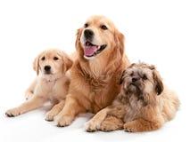 Tres perros imagenes de archivo