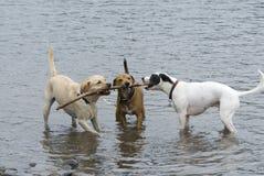 Tres perros y un palillo imagenes de archivo