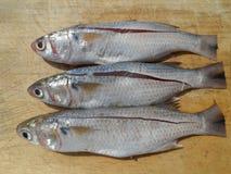 Tres pescados Foto de archivo