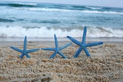 Tres pescados de la estrella azul en la playa imagen de archivo