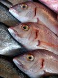 Tres pescados frescos Imagen de archivo libre de regalías