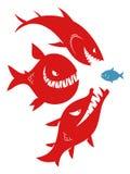 Tres pescados grandes del peligro y un pequeño pescado Imágenes de archivo libres de regalías