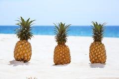 Tres piñas en el fondo blanco de playa arenosa Fotos de archivo libres de regalías