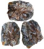 Tres piedras minerales del lamprophyllite aisladas Fotografía de archivo libre de regalías