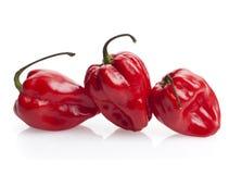 Tres pimientas de chile rojas del habanero Foto de archivo libre de regalías