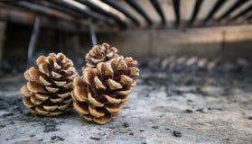Tres pinecones rústicos fotos de archivo libres de regalías