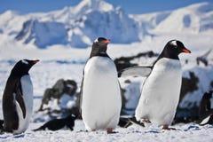 Tres pingüinos imagen de archivo