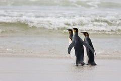 Tres pingüinos de rey Fotos de archivo